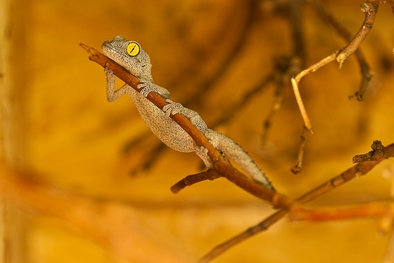 Gecko_0451 - dvd2.jpg